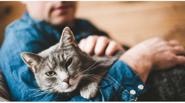 Cargar a tu gato de esta manera tan habitual ¡puede hacerle mucho daño!