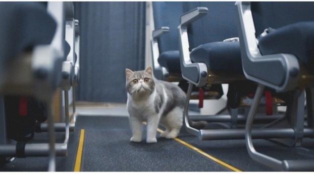 Perdieron a su gato en el aeropuerto, ¡y lo que hizo para recuperarlo es increíble!
