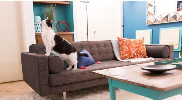 Si tienes esto en casa, tu gato podría estar en riesgo
