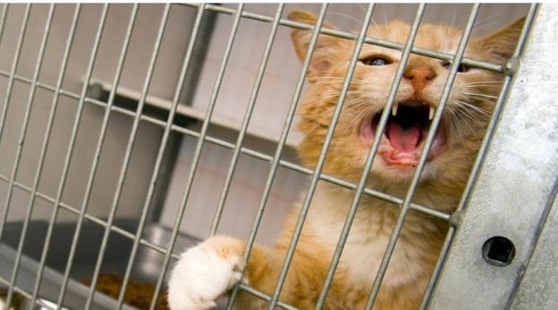 Encontró a su gato en venta en Internet tras dejarlo con el veterinario
